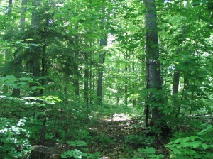 Much of the region is densely forested.